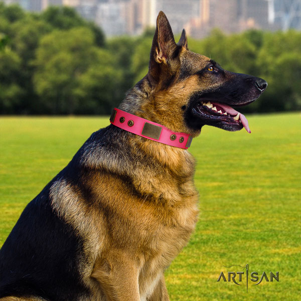 German Shepherd full grain genuine leather dog collar with studs for your attractive doggie
