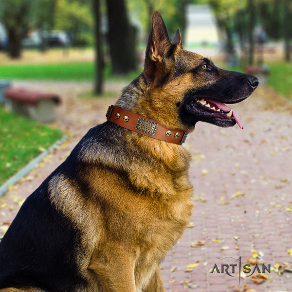 German Shepherd genuine leather dog collar with embellishments for your stylish canine