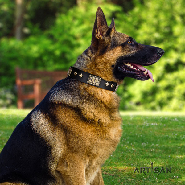 German Shepherd natural genuine leather dog collar with adornments for your stylish doggie