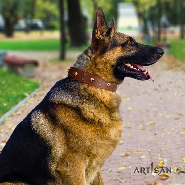 German Shepherd full grain leather dog collar with embellishments for your beautiful pet
