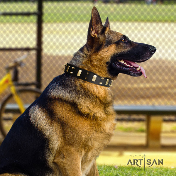 German Shepherd full grain genuine leather dog collar with studs for your handsome canine
