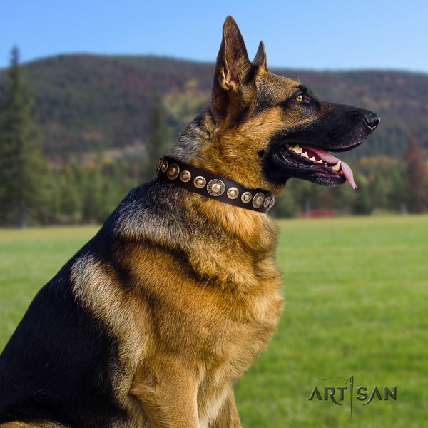 German Shepherd full grain natural leather dog collar with studs for your beautiful four-legged friend