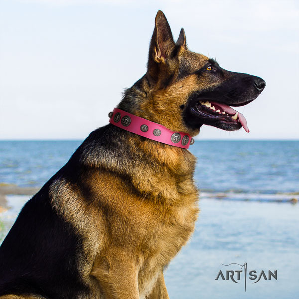 German Shepherd perfect fit genuine leather collar with adornments for your dog