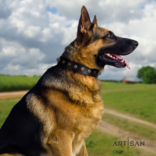 German Shepherd amazing full grain leather collar with adornments for your four-legged friend