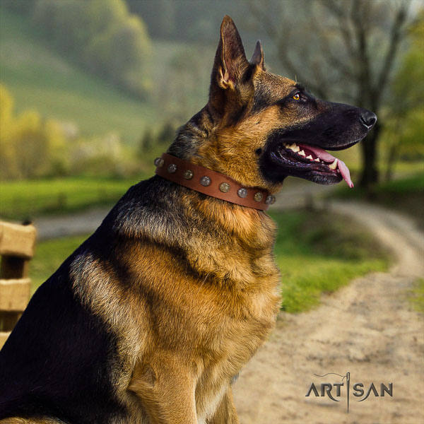 German Shepherd stylish full grain leather collar with studs for your pet