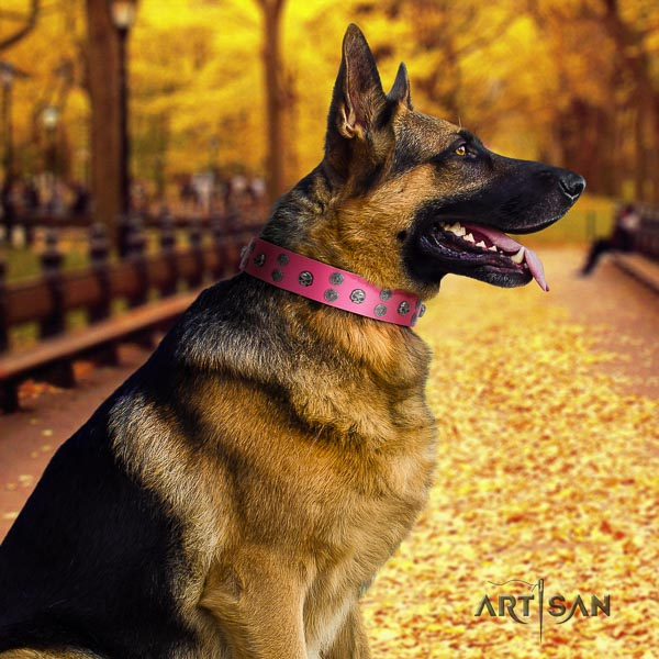 German Shepherd unique full grain natural leather collar with studs for your doggie