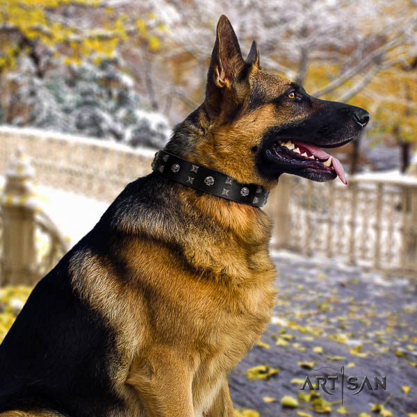 German Shepherd extraordinary full grain natural leather collar with embellishments for your doggie