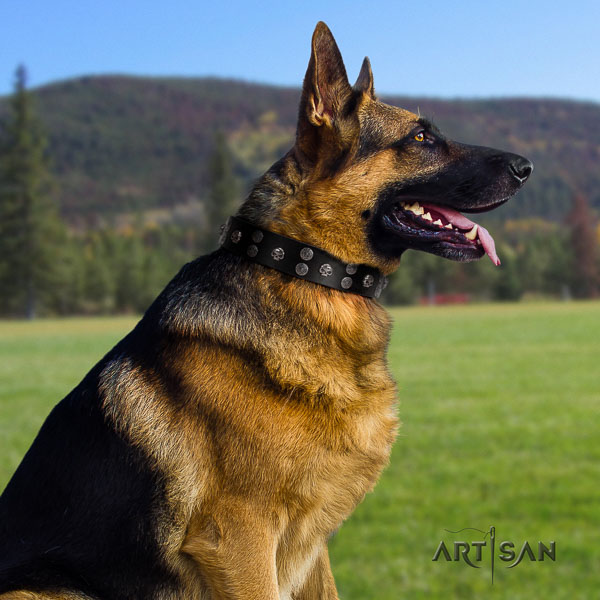 German Shepherd significant full grain leather collar with adornments for your doggie