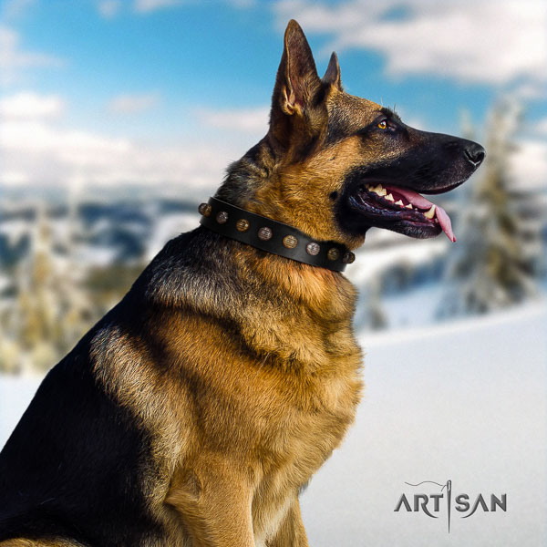 German Shepherd significant full grain natural leather collar with embellishments for your canine
