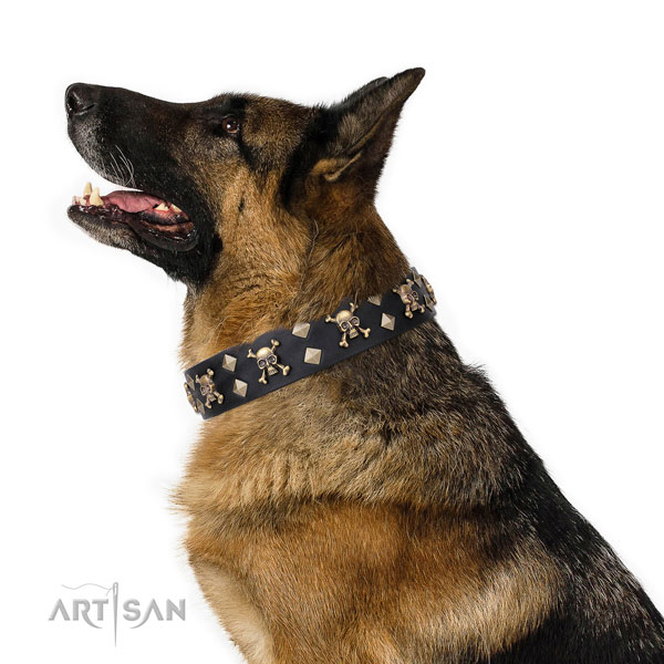 German Shepherd adorned full grain genuine leather dog collar for comfy wearing