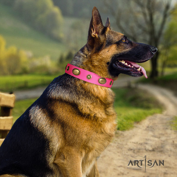 German Shepherd leather dog collar with adornments for your impressive four-legged friend