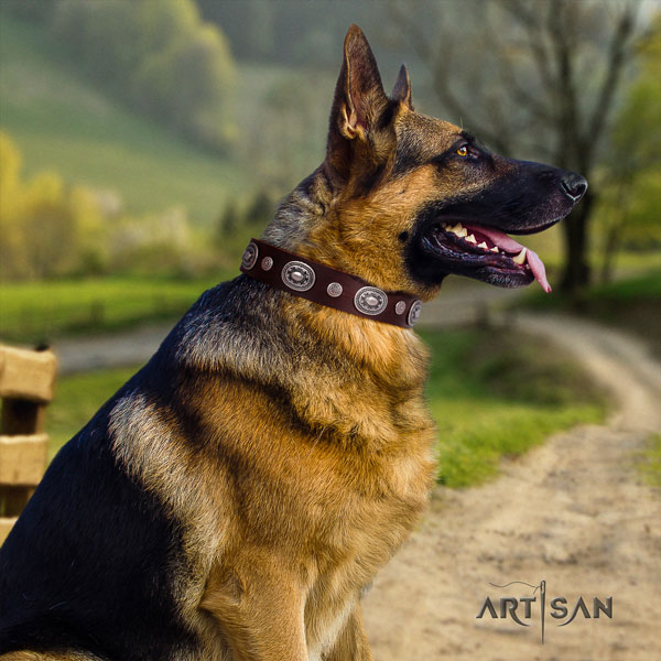 German Shepherd leather dog collar with adornments for your handsome four-legged friend