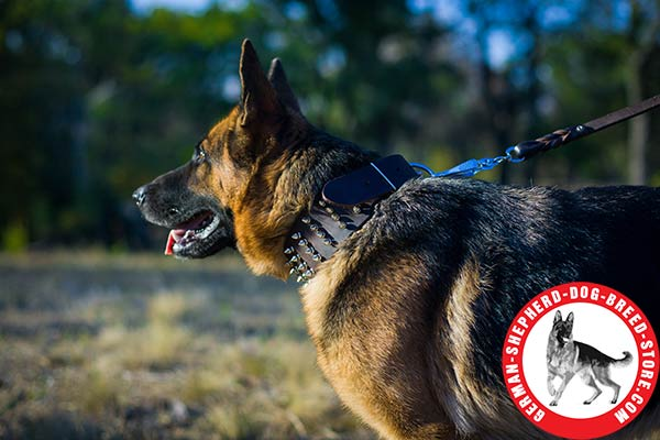 German Shepherd brown leather collar of genuine materials with spikes for any activity