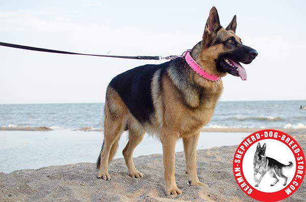 Extremely Stylish Spiked Leather German Shepherd Collar in Bright PInk