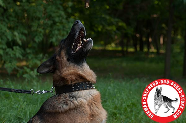 German Shepherd Leather Collar with Nickel-plated Spikes in 3 Rows