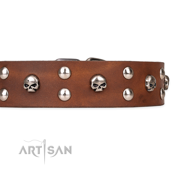 Full grain genuine leather dog collar with polished surface