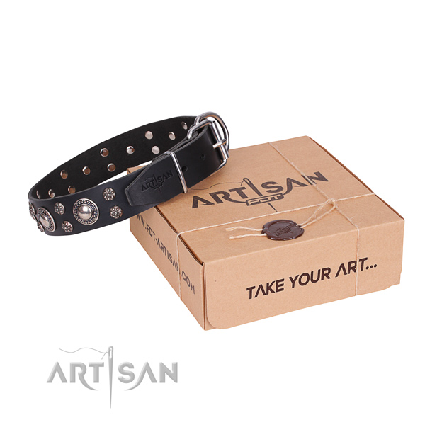 Everyday leather dog collar with stunning studs
