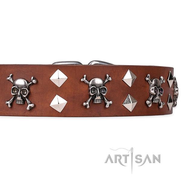 Day-to-day leather dog collar with sensational decorations