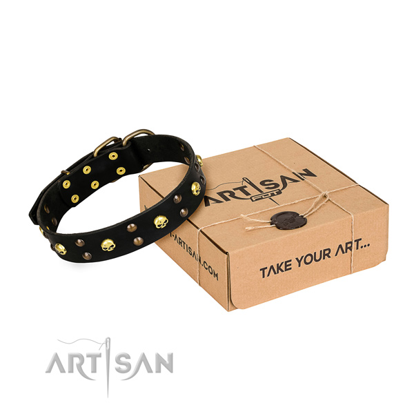 Casual leather dog collar with exceptional studs