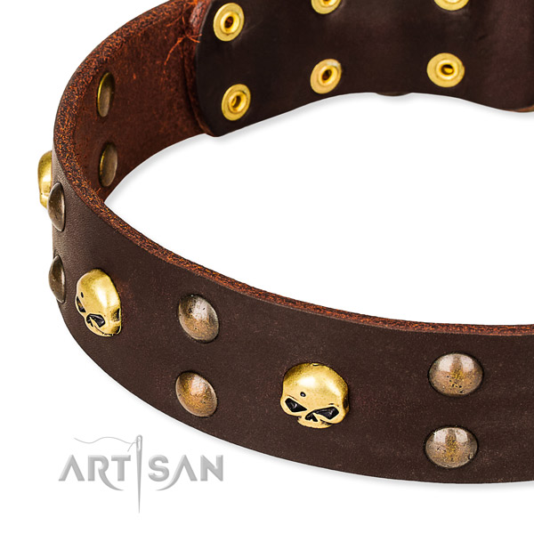 Daily leather dog collar for training