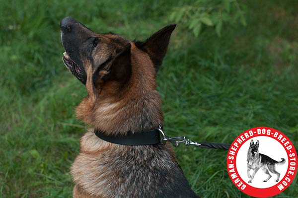 Walking and Training Leather Collar for German Shepherd