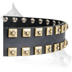 Brass Studs on Leather German Shepherd Collar