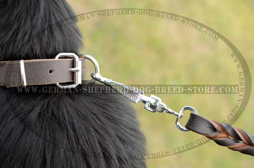 Nickel Plated D-Ring On Dog Collar Corrosion Protected