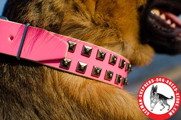 Stylish Leather Dog Collar with Unique Adornment