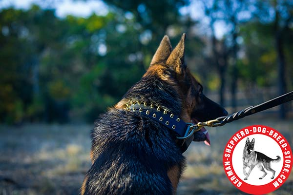 Chic Design Spiked Collar for German Shepherd