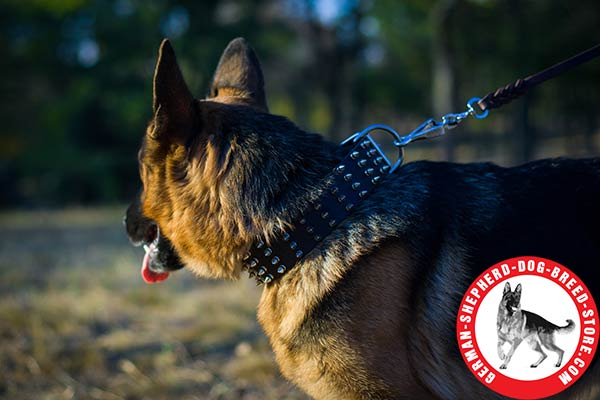 Walking-in-style Leather Collar with Silvery Spikes for German Shepherd