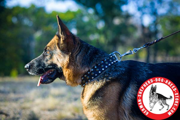 First-rate Leather Collar with Stunning Design for German Shepherd