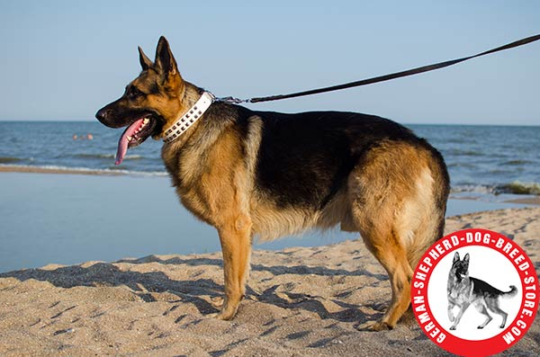 Excusively Designed Leather German Shepherd Collar with Elegant Decorations