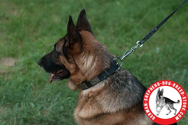 Vintage Dog Collar with Non-rusting Hardware for German Shepherd