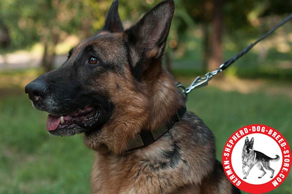 Reliable and Comfortable German Shepherd Collar for Daily Wear