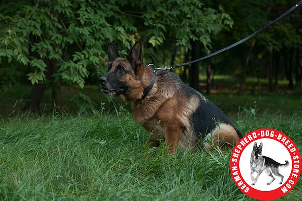 Best Leather Collar for German Shepherd