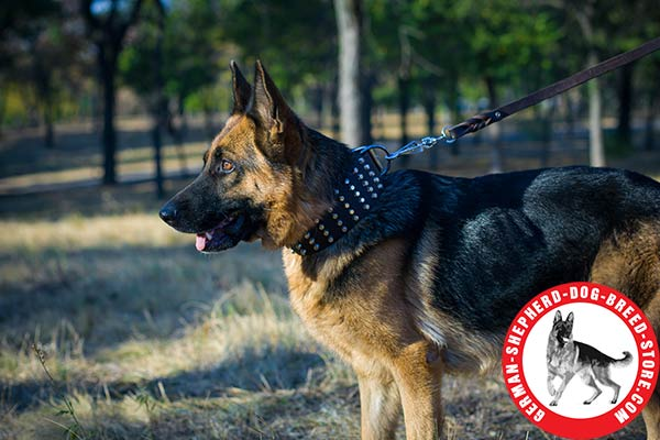 Studded Leather German Shepherd Collar Extra Wide