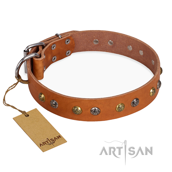 Daily walking significant dog collar with corrosion resistant fittings