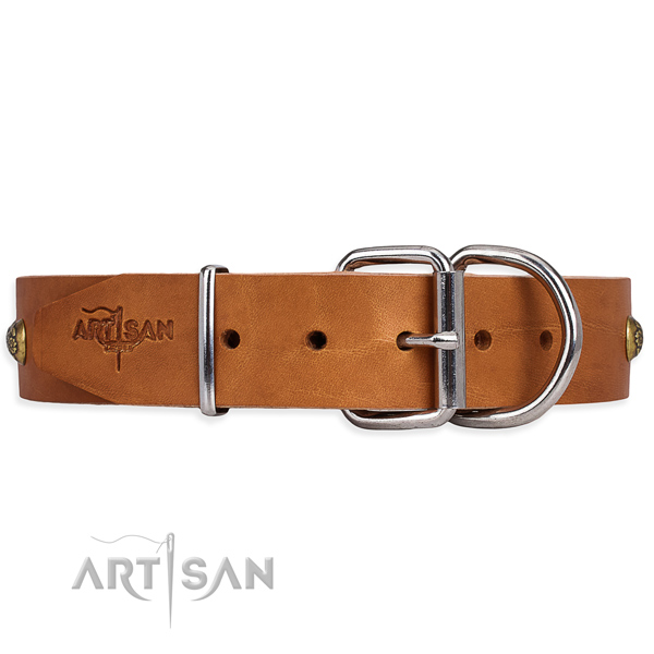 Full grain leather dog collar with fashionable corrosion proof studs