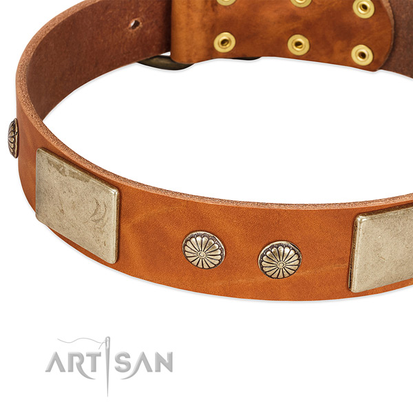 Corrosion resistant traditional buckle on natural genuine leather dog collar for your canine