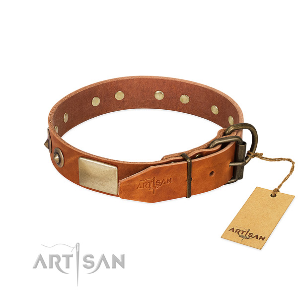 Rust resistant hardware on everyday walking dog collar
