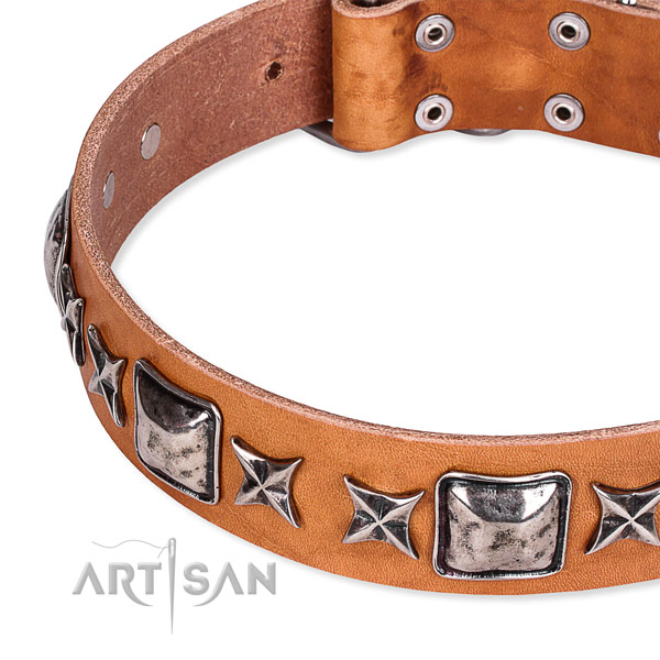 Daily walking decorated dog collar of strong full grain leather