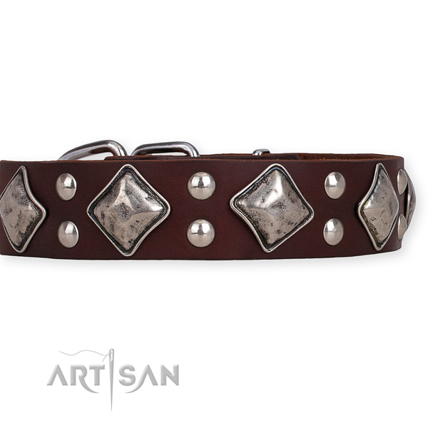 Full grain natural leather dog collar with awesome rust-proof adornments
