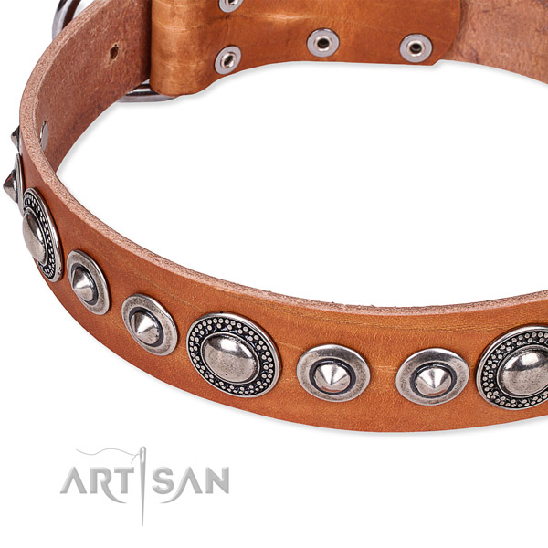 Fancy walking adorned dog collar of fine quality full grain natural leather