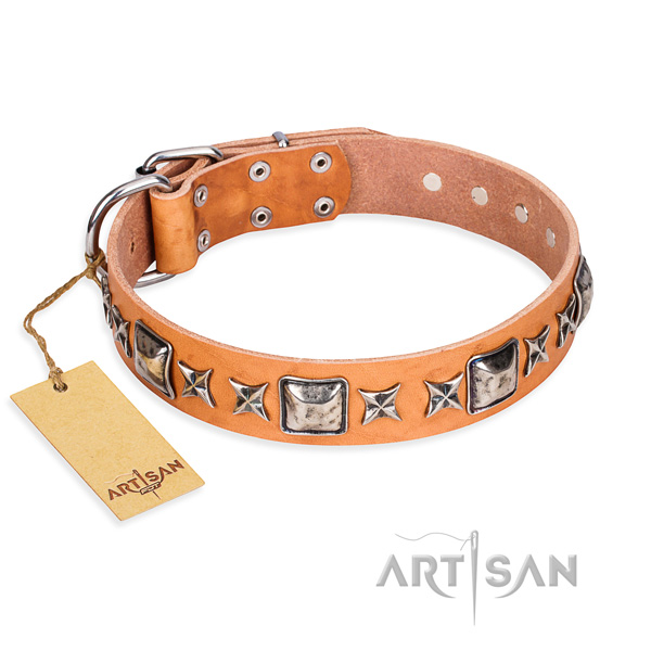 Walking dog collar of quality natural leather with adornments