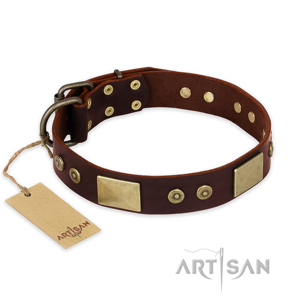 Incredible full grain leather dog collar for everyday walking