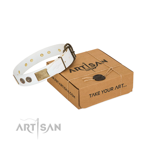 Rust resistant buckle on leather dog collar for basic training