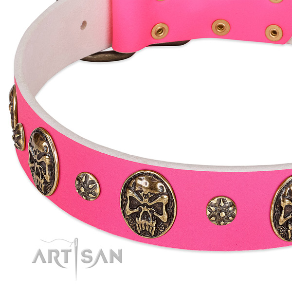 Extraordinary dog collar crafted for your attractive dog