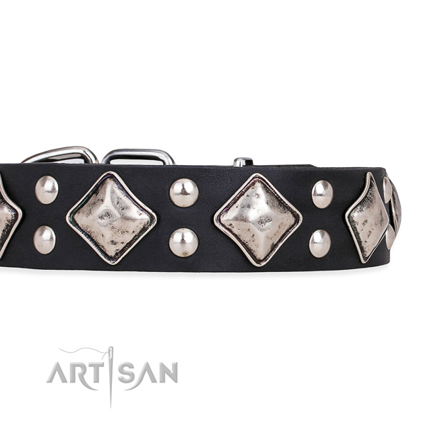 Full grain leather dog collar with stylish strong embellishments