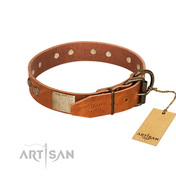 Rust-proof traditional buckle on everyday use dog collar