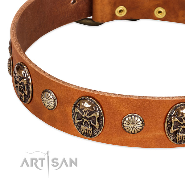 Corrosion resistant decorations on genuine leather dog collar for your canine